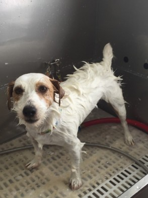 Dog Bath Lake Elsinore Shampoo Condition 2