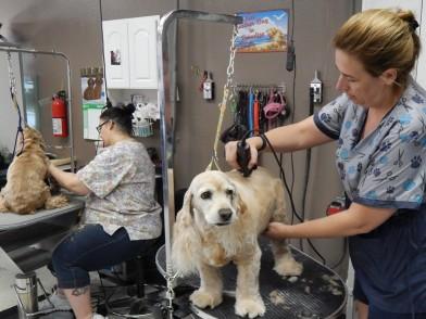 Groomers Lake Elsinore Haircut